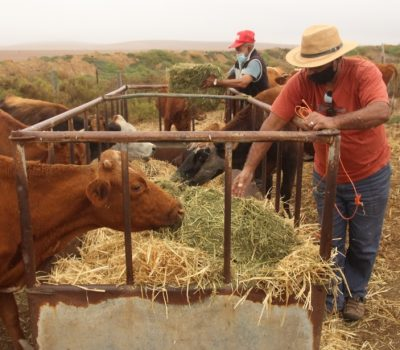 Support of Community Farming